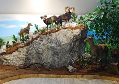 Merán Fülöp Vadászati Múzeum diorámái